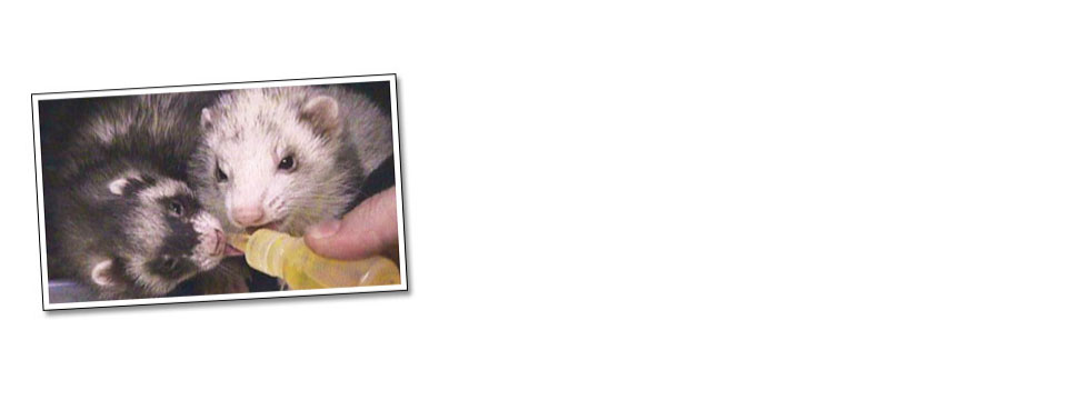 Sharing ferretone!